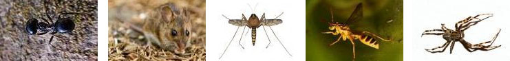 Pest control services in Nampa and the Treasure valley